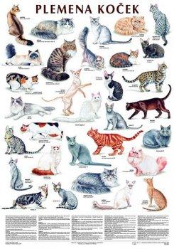 Plakát - Plemena koček
